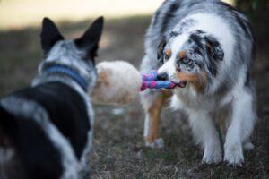 giochi per cani contesa treccia hniti pelo naturale pecora contesa sviluppo del morso del cane