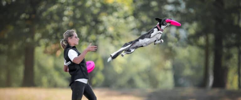 frisbeescape disc dog scegliere il frisbee per il cane